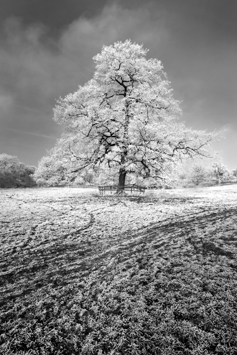 photoblog image tree in frost