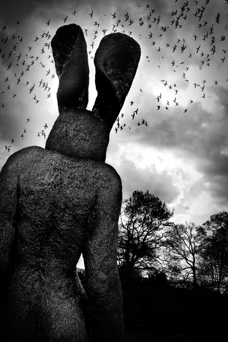 photoblog image lady hare  and birds
