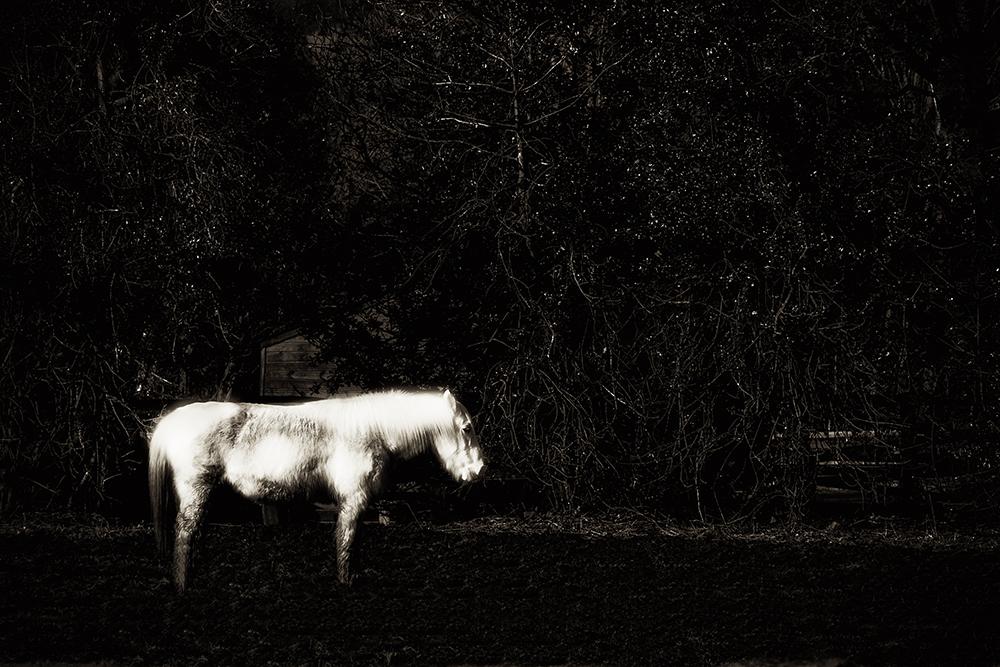 photoblog image North Road Horse - 6 years on
