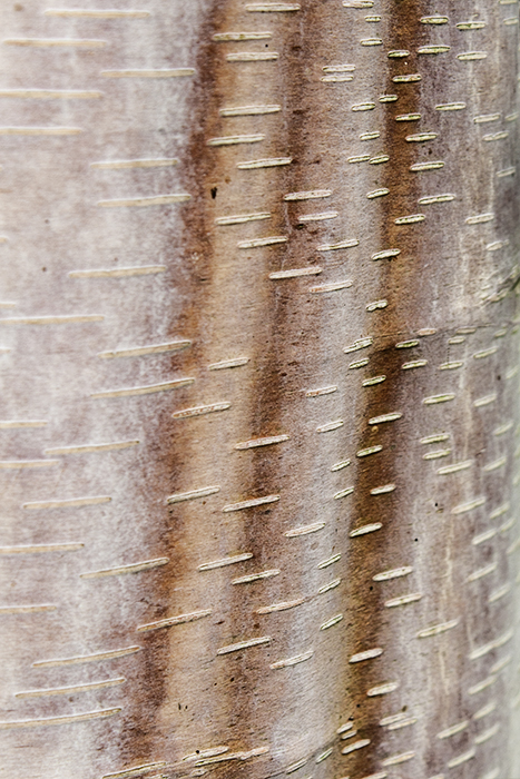 photoblog image the patterns made by trees i