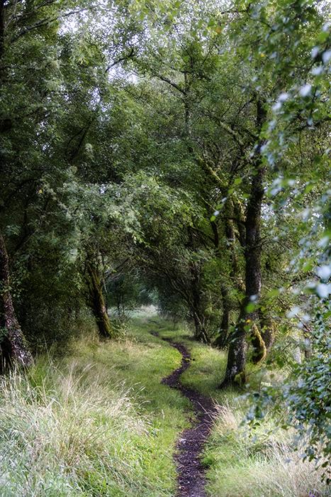 photoblog image a well trodden path