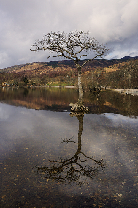 photoblog image Loch Lomond tree