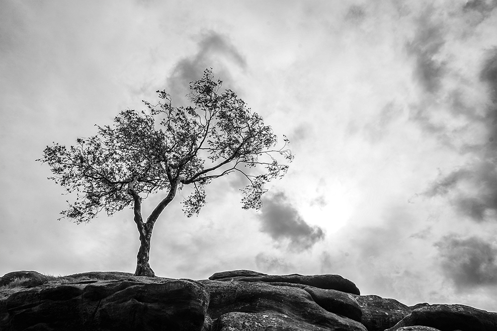 photoblog image Brimham Rocks