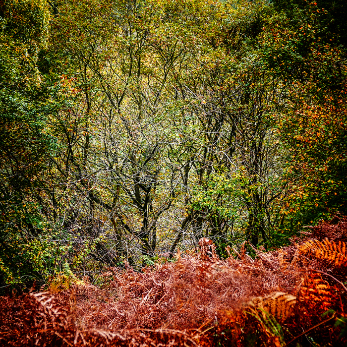 photoblog image A walk along Nidd Gorge